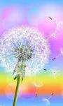 Dandelion HD Wallpapers live screenshot 4/6