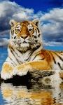 Relax Tiger Live Wallpaper screenshot 1/3