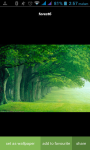 Forest HD Wallpaper screenshot 3/3