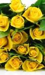 Beautiful Summer Flowers pictures Wallpaper screenshot 3/6