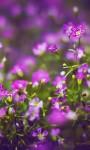 Beautiful Summer Flowers pictures Wallpaper screenshot 4/6
