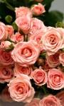 Beautiful Summer Flowers pictures Wallpaper screenshot 5/6