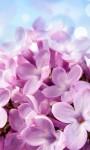 Beautiful Summer Flowers pictures Wallpaper screenshot 6/6