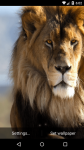 Beautiful Lion Live Wallpaper HD screenshot 5/6