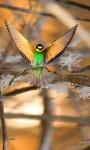 BirdsWall screenshot 1/1