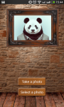 Animal Faces screenshot 6/6
