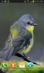 Cute Little Bird  screenshot 1/3