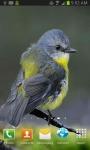 Cute Little Bird  screenshot 2/3