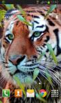 Tiger Live Wallpaper HD Free screenshot 2/2