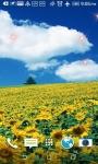 Beatiful Sunflowers Wallpapers screenshot 3/4
