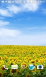 Beatiful Sunflowers Wallpapers screenshot 4/4