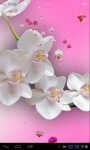 Orchids live wallpaper free screenshot 3/3