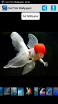 Koi Fish HD Wallpaper screenshot 1/4