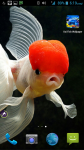 Koi Fish HD Wallpaper screenshot 4/4