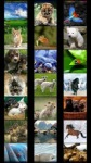 Animal Wallpapers by Nisavac Wallpapers screenshot 1/6