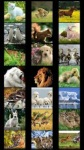 Animal Wallpapers by Nisavac Wallpapers screenshot 2/6