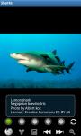 Sharks : Ocean Wild Animals screenshot 1/6