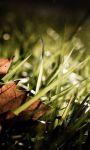 Autumn Pro LWP screenshot 2/4