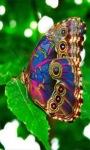 Multicolor Butterfly LWP screenshot 2/3