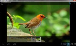 Cute Birds Wallpaper Free screenshot 1/3