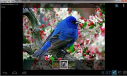 Cute Birds Wallpaper Free screenshot 2/3