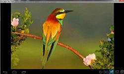 Cute Birds Wallpaper Free screenshot 3/3