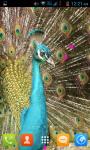 Peacock Live Wallpaper Best screenshot 2/4