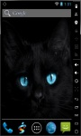 Blue Eyes Cat Live Wallpaper screenshot 1/2