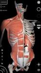 Sistema Muscolare Anatomia 3D original screenshot 2/6