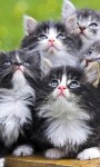 Cute and Funny Kittens face Wallpaper screenshot 2/6