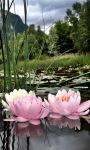 Nature Lotus Live Wallpaper screenshot 1/3