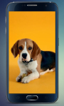 Beagle Puppy Live Wallpaper screenshot 3/3