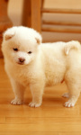 Cute Puppy Live Wallpaper 2 screenshot 1/4