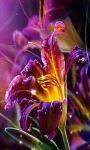 Flower Magic Live Wallpaper screenshot 1/3