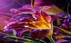 Flower Magic Live Wallpaper screenshot 2/3
