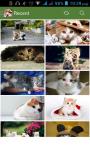 Cat HD Wallpaper screenshot 1/3