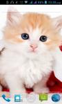 Cat HD Wallpaper screenshot 2/3