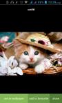Cat HD Wallpaper screenshot 3/3