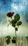 Window Rose Live Wallpaper screenshot 2/3