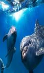 Dolphin Touch Live Wallpaper screenshot 4/4