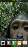 Monkey found your phone screenshot 2/5