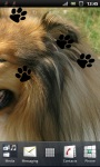 Beautiful Collie Lassie Dog Live Wallpaper screenshot 3/3