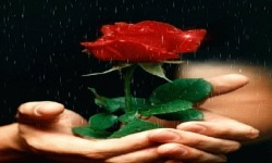 Rose For You Live Wallpaper screenshot 2/3
