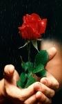 Rose For You Live Wallpaper screenshot 3/3
