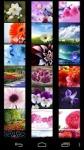 Flower Wallpapers by Nisavac Wallpapers screenshot 1/6