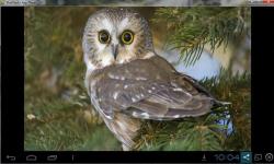 Cute Adorable Animal Wallpaper screenshot 2/6