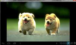 Cute Adorable Animal Wallpaper screenshot 5/6