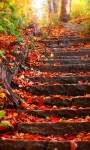 Autumn HD Walls screenshot 3/5