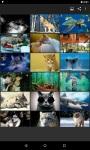 Animals Wallpaper FHD screenshot 1/4