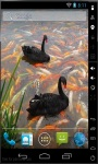 Black Swans Live Wallpaper screenshot 2/2